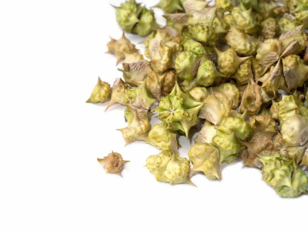 Tribulus Terrestris Herbal Tea