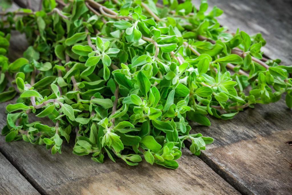 Marjoram Herbal Tea